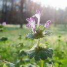 Sunshine and Flower by Allison Floyd