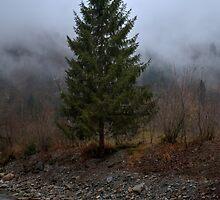 Lone pine tree by PeterCseke