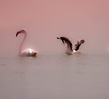 Flamingos in pink  by Qnita