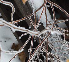 Ice storm by uneditedwigirl