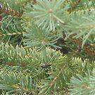 Lonely 'lil pinecone  by gypsykatz