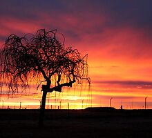 Tree skeleton in the sunset...  by Qnita