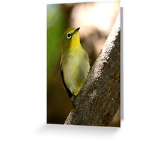 South African Bird (Cape White-eye, Zosterops pallidus) Greeting Card
