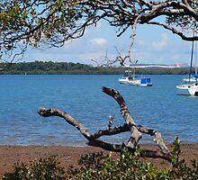 Morton Bay Views by Quicksilver