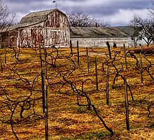 The Vineyard by Terry Doyle