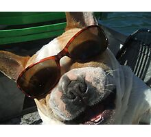 just the cutest frenchie in the whole wide world Photographic Print