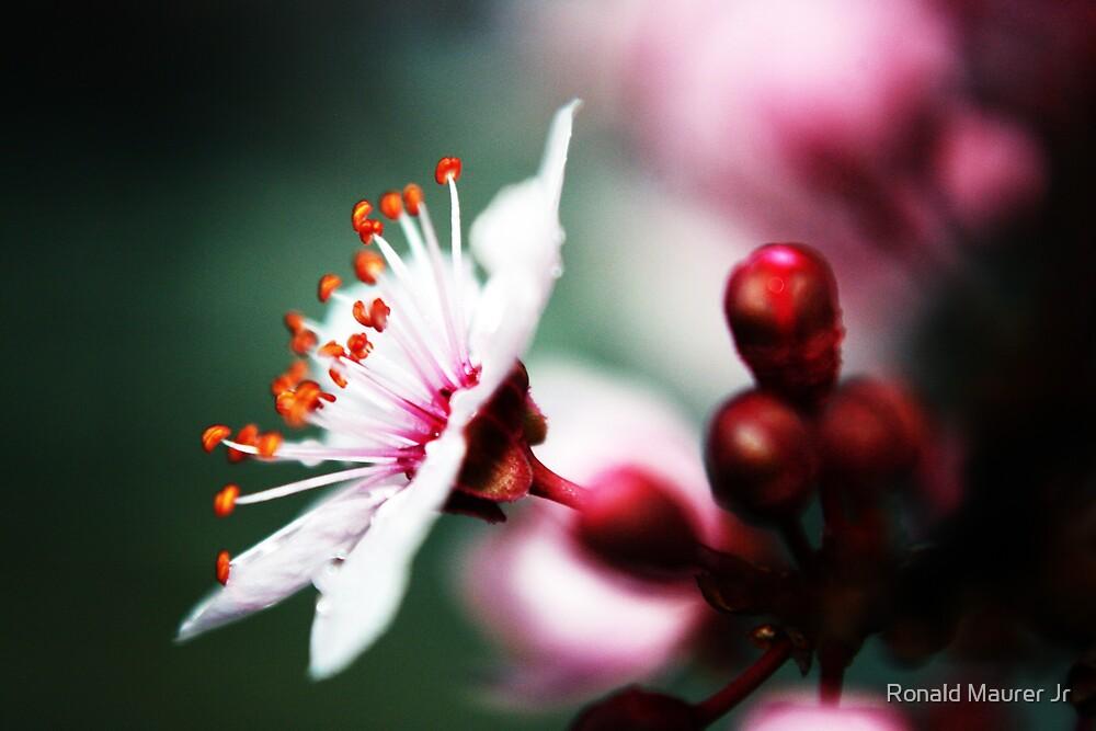 Profile of Spring by Veronica Maur'er