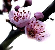 Vivid blooming by Veronica Maur'er