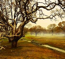Fairy-land by Beatrix M Varga