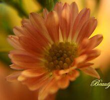 Beauty by artsthrufotos