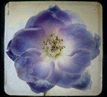 Flower 10 by Adam Hardyman