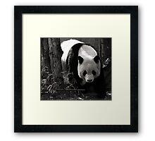maestus Framed Print