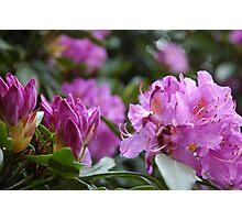 Clan: Flower1 Photographic Print