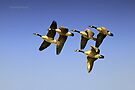 5 Geese Formation by Yannik Hay