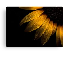 Backyard Flowers 28 Sunflower Canvas Print