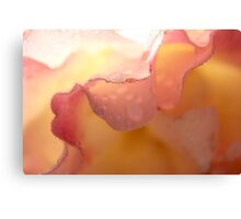Lace on rose pettals... Canvas Print