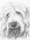 Labradoodle by BarbBarcikKeith