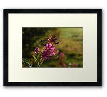 Clan: Flower3 Framed Print