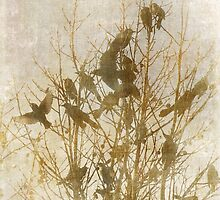 Birds on Silk by Susan Werby