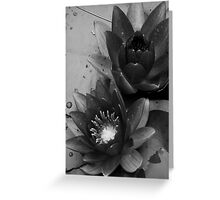Black and White Waterlillies Greeting Card