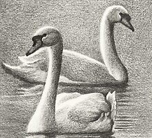 Lord & Lady of the Lake - Swans  by John Houle