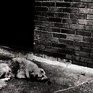 dog by Alvaro Sánchez