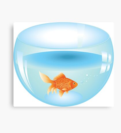 Gold fish swimming in the water in a fishbowl 2 Canvas Print