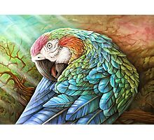 Rainbow Polly Photographic Print
