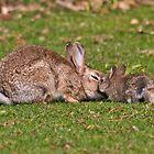 Bunny Love by Krys Bailey