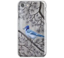 Blue Jay In Pines iPhone Case/Skin