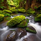 Otways Rainforest by Paul Pichugin