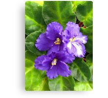 Violets I Canvas Print