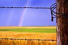 Rainbow Promise by Dawne Olson
