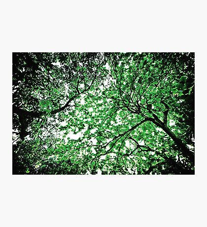 Celestial Roots Photographic Print