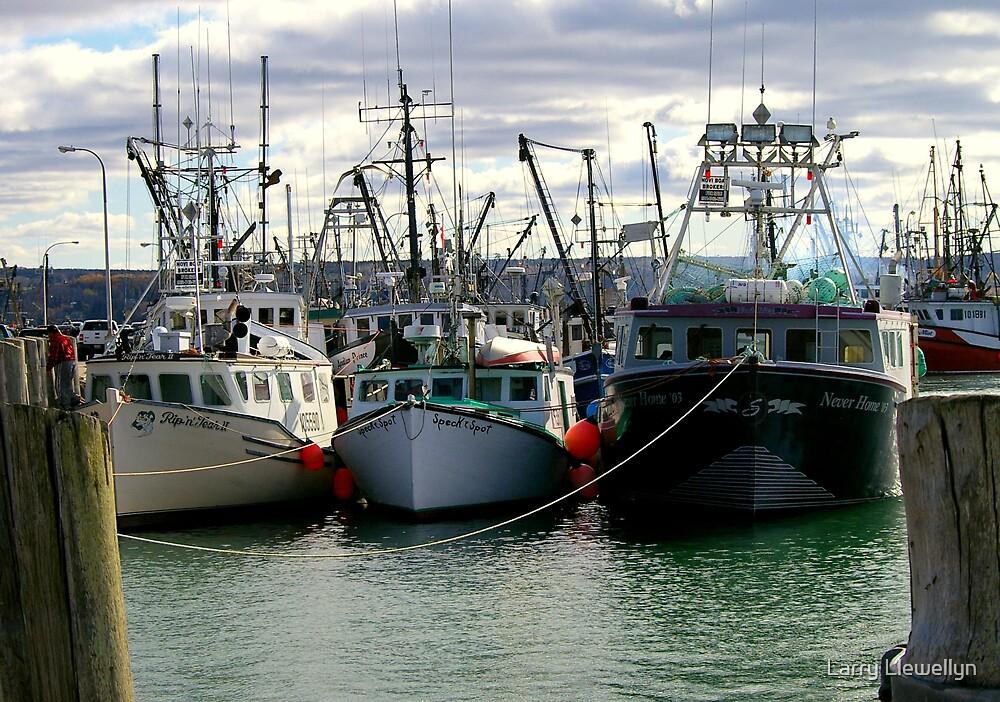 Fishing Fleet of Digby Nova Scotia, Canada by Larry Llewellyn