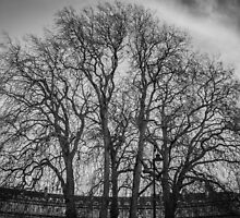 Trees in the Circus of Bath by Nicole Petegorsky