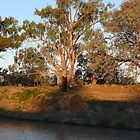 Majestic River Red Gum by JulieMahony