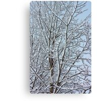 Snowy aspen branches  Canvas Print