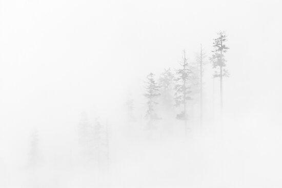 Winter Veil by DawsonImages