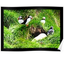 THE PUFFIN FAMILY Poster