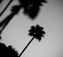 Palm Trees by Janina
