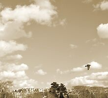 Bird Flying by MissCellaneous