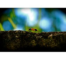 Small Life ... Big World Photographic Print