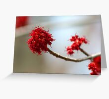 Dressed in Red Greeting Card