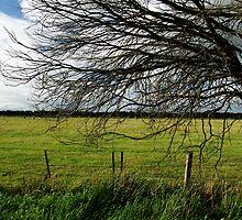 Beyond the fence by Rosina  Lamberti