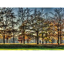 Romance in Greenwich Park Photographic Print