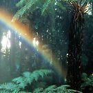 Rainforest Bow by Ern Mainka