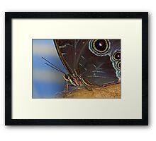 Owl Butterfly Macro Framed Print