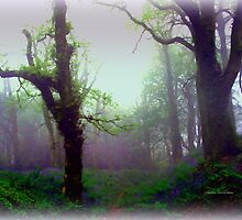 Mystical Morning by Charmiene Maxwell-batten
