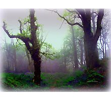 Mystical Morning Photographic Print